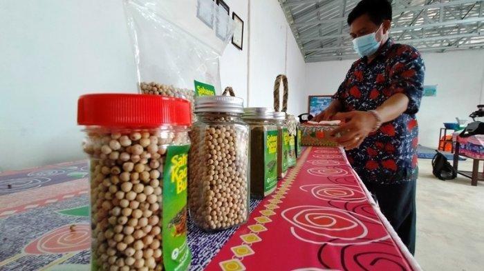 Produksi lada di koperasi plasma Kacang Butor, Desa Kacang Butor, Kecamatan Badau, Tanjungpandan, Belitung, Kamis (9/9/2021) sudah memiliki omzet Rp 6,5 miliar.