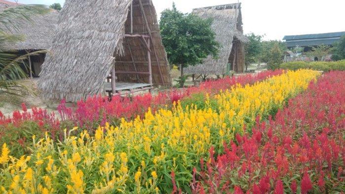 Yuk Tamasya ke Taman Bunga Celosia Garden Ake, Ada Kolam Renang hingga Spot Foto yang instagramable. - 20210911-taman-bunga4.jpg
