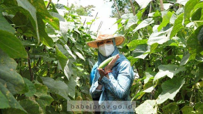 Manfaatkan Halaman Rumah, Warga Desa Sungai Padang Tanam Toga dan Sayur-Mayur