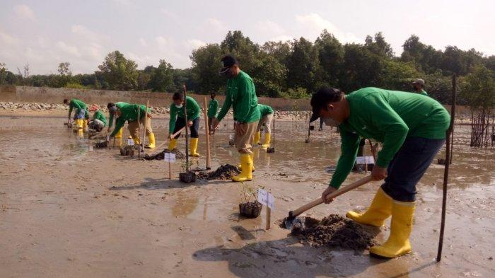 Tanam 2000 Mangrove, PT Timah Hidupkan Wisata Pantai Tanjung Pakdan