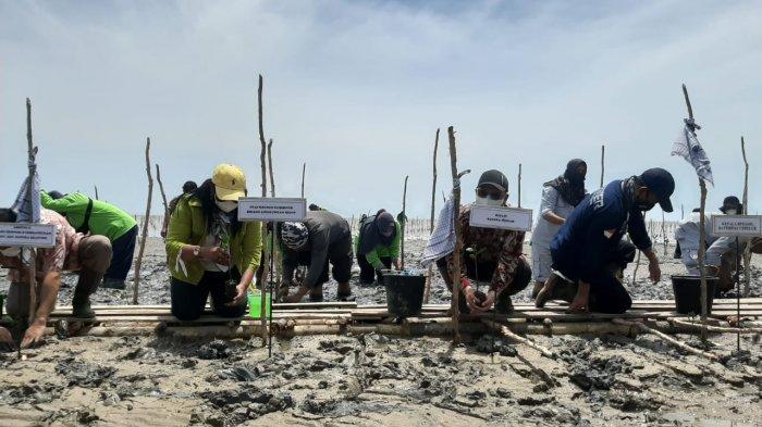 Desa Kurau Bangka Tengah Jadi Lokasi Percepatan Rehabilitasi Mangrove di Babel