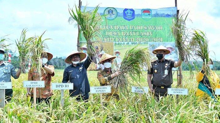 Panen Padi Raya Sawah di Banyuasin, Bupati Bangka Apresiasi Petani Kelola Lahan Kritis