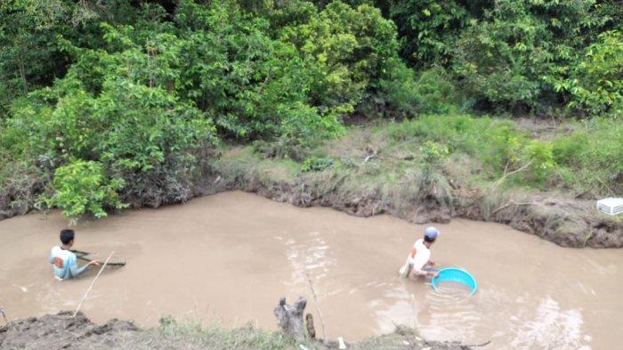 Diduga Akibat Pencemaran Limbah Pabrik, Ribuan Ikan di Sungai Mendalu Mabuk dan Mati