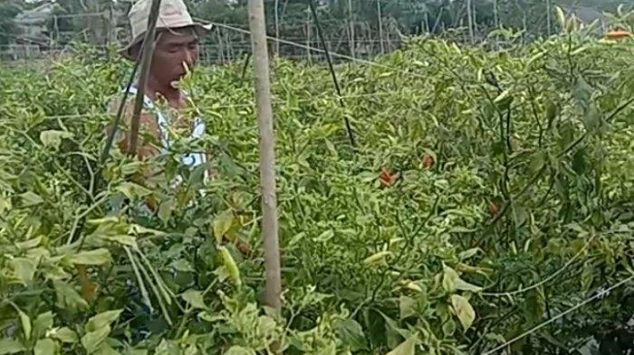 Eksistensi Petani di Tengah Pandemi