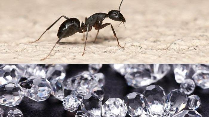Cara Mengusir Semut, Letakkan Bahan Ini Agar Semut Tidak Masuk Rumah
