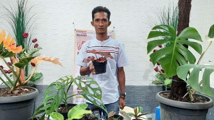 Minat Tanaman Hias Meningkat, Penjual Ini Raup Omzet Rp 20 Juta Perbulan, Pengiriman Hingga ke Papua - agy1.jpg