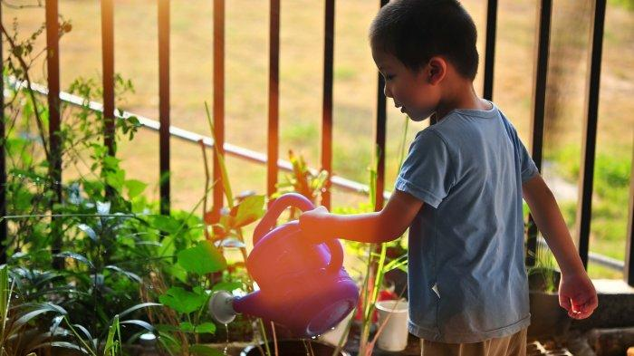 MATERI BELAJAR Soal dan Jawaban Tema 1 Sub Tema 4 Pertumbuhan dan Perkembangan Tumbuhan Kelas 3 SD