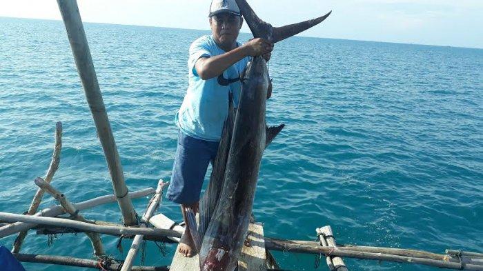 Anas Setengah Jam Bertarung Melawan Ikan Marlin di Perairan Tanjung Kelumpang