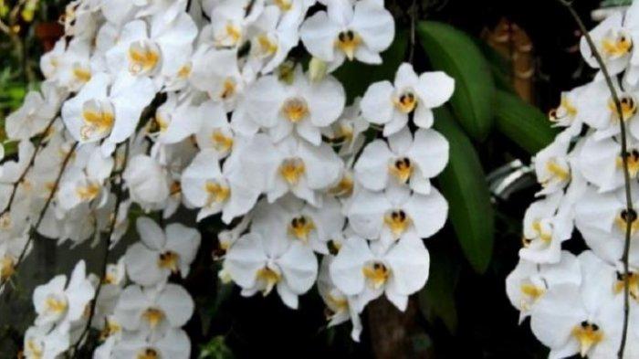 Cocok Jadi Dekorasi Rumah, In 10 Pilihan Tanaman Hias Bunga Beraneka Warna