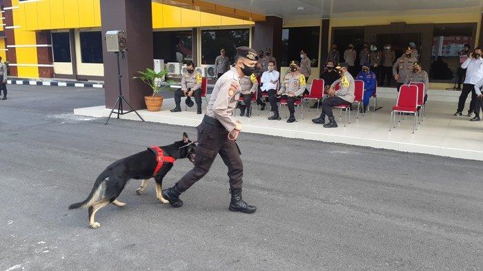Berhasil Ungkap Sabu 211 Kilogram, Mabes Polri Hadiahi Polda Bangka Belitung Anjing Pelacak Narkoba