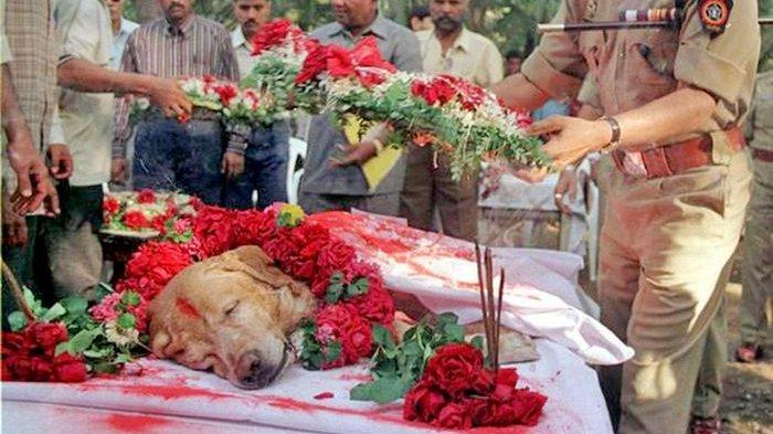 Istimewanya Pemakaman Anjing Pelacak Ini Ternyata Berkat Jasanya yang Luas Biasa