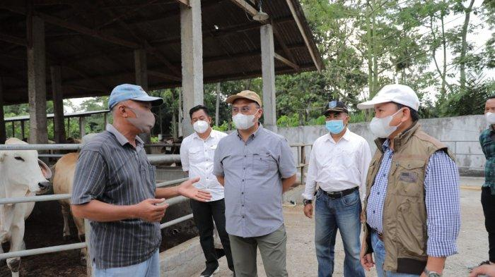 Gubernur Bangka Belitung Erzaldi Jajaki Pembiakan Sapi Australia