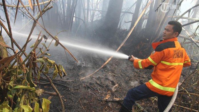 Petugas pemadam kebakaran berusaha memadamkan api yang membakar lahan di kawasan Kelurahan Tangkerang Tengah, Kec Marpoyan Damai, Pekanbaru, Riau, Minggu (16/2/2014). Kebakaran hutan dan lahan akhir-akhir ini marak terjadi di Kota Pekanbaru akibat aktivitas pembukaan lahan dan cuaca panas sehingga mengakibatkan tebalnya kabut asap. (TRIBUN PEKANBARU/THEO RIZKY)