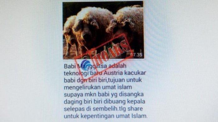 Isu Babi Berbulu Domba Diadukan ke Kominfo, Ternyata Ini Fakta Sebenarnya