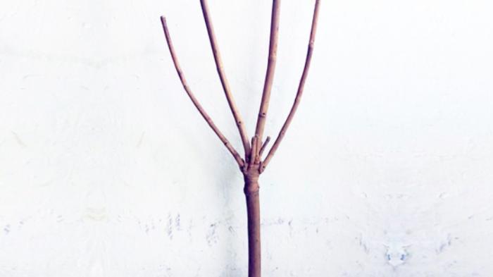Inilah Makna dan Tuah Bambu Unik Junjung Derajat – Songgo Buwono