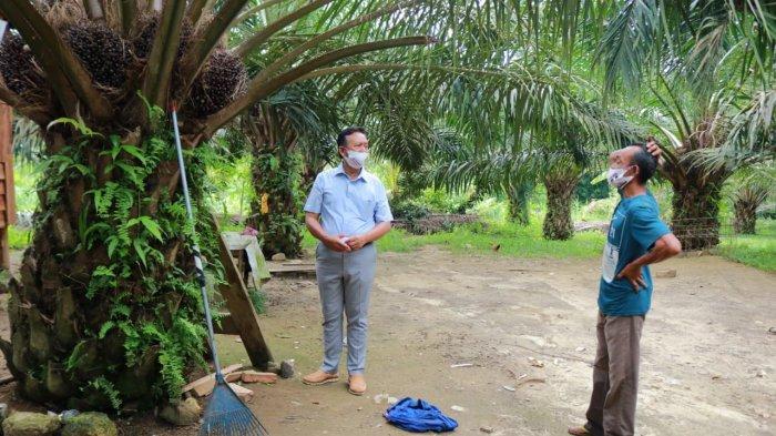 Tinjau Perkebunan Rakyat, H Korari Suwondo Canangkan Bantuan Bibit Sawit
