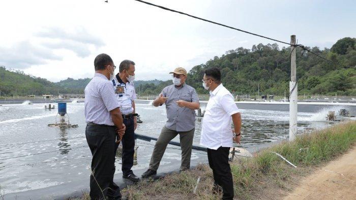 Gubernur Erzaldi Kagumi Tambak Udang Vaname Indocom, Bertahan Hingga 22 Tahun Ini Rahasianya