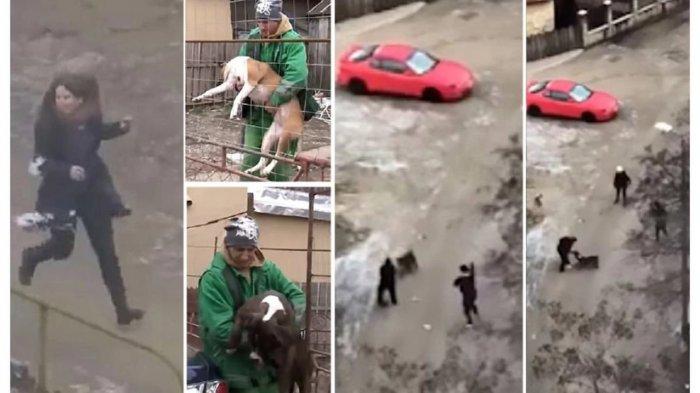 Tak Disangka, Selamatkan Wanita dari Serangan Anjing, Pria Ini Malah Alami Hal Mengerikan