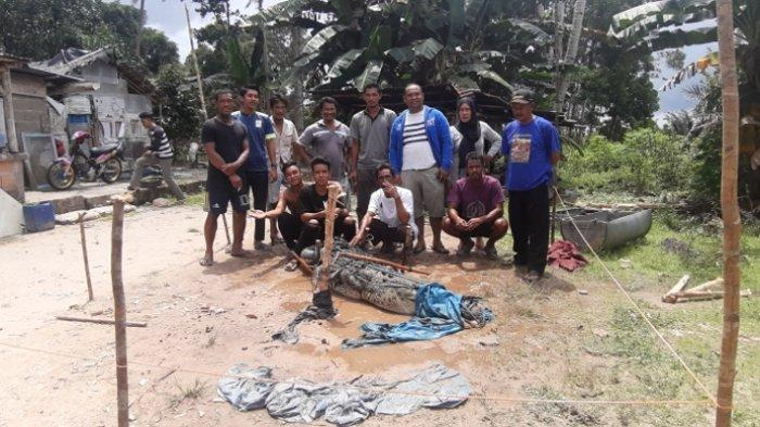 Warga Berhasil Tangkap Buaya 3 Meter, Sering Memangsa Hewan Peliharaan, Nelayan Was-was saat Melaut