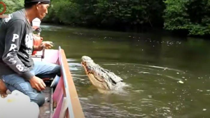 Pria Ini Diserang Buaya Besar di Sungai, Bukannya Takut Malah Lakukan Hal Ini