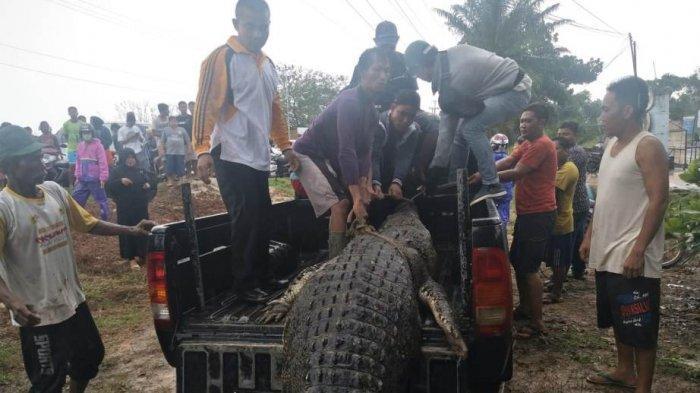 Buaya 7 Meter Terkam Pencari Ikan, Detik-detik Kejadian, Saksi Trauma hingga Ritual Dukun Kampung