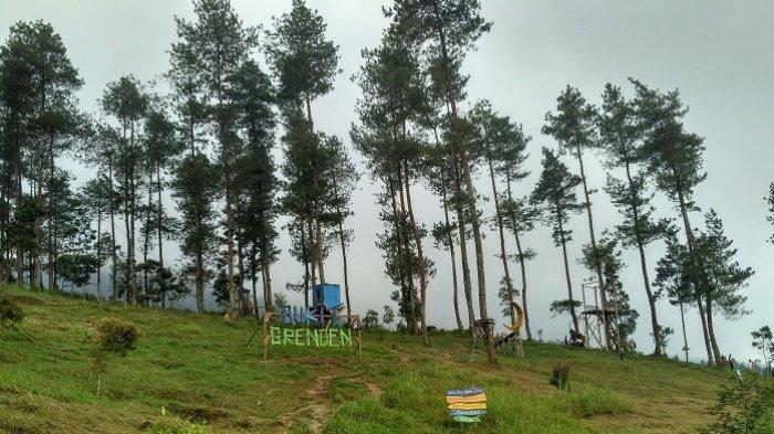 Menikmati Eksotisme Bukit Grenden, Wisata Hutan Pinus Merah Kekinian di Magelang