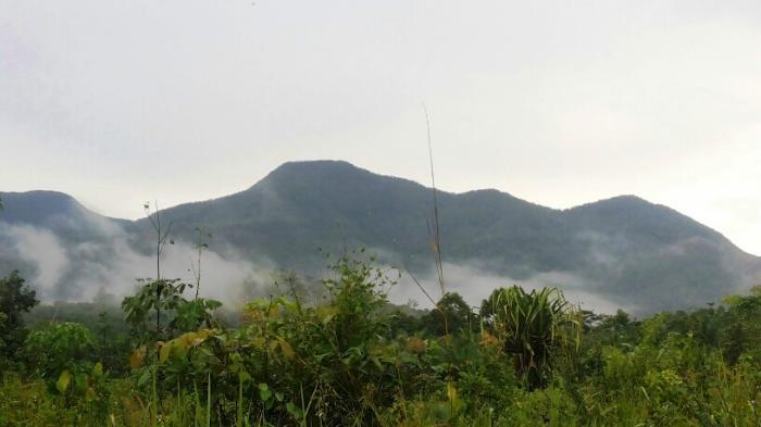 Camat Riausilip Belum Terima Laporan Upaya Pemulihan Hutan Bukit Maras