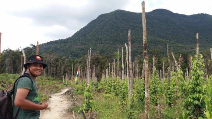 Warga Ingin Bergabung Menanam Pohon dan Camping Bersama Nadine