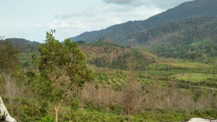 Sejak Terbakar di 2015, Belum Ada Upaya Pemulihan Hutan Bukit Mupos
