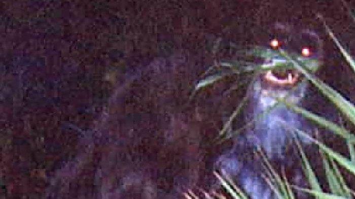 Mengenal Bunyip, Makhluk yang Dipercaya Penduduk Asli Australia, Besarnya 2 Kali Lipat Manusia