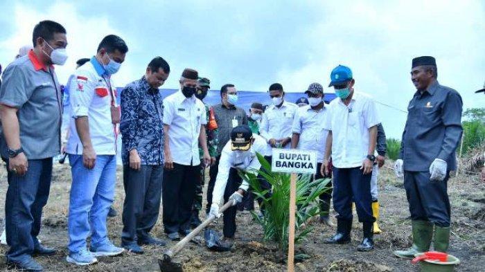 Pemkab Bangka Usulkan 243,3 Hektare Tambahan untuk Program Peremajaan Sawit Rakyat