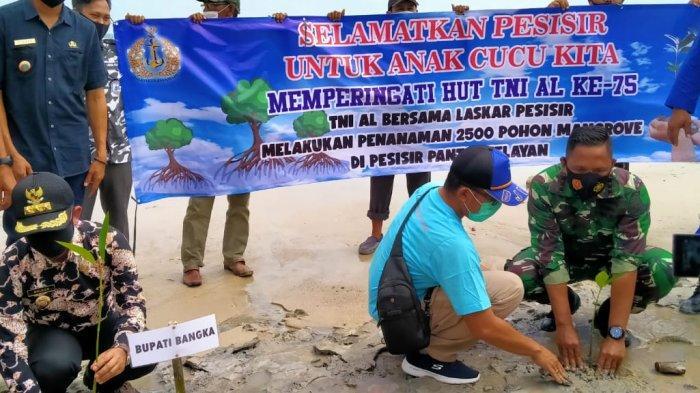 Janji Pantau Pertumbuhan, Forkompinda Bangka Tanam 2.500 Bibit Mangrove di Pesisir Pantai Sungailiat