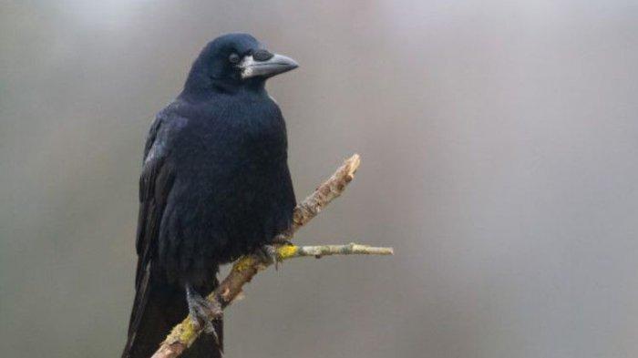Suara Burung Malam Hari Mitosnya Sangat Mengerikan