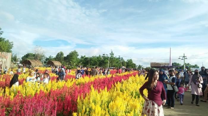 Penasaran Ingin Berfoto di Kebun Bunga, Pengunjung Celosia Garden Ake Membludak di Akhir Pekan