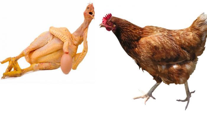Hati-hati, 6 Bagian Tubuh Ayam Ini Jangan Terlalu Sering Dikonsumsi, Ini Bahayanya