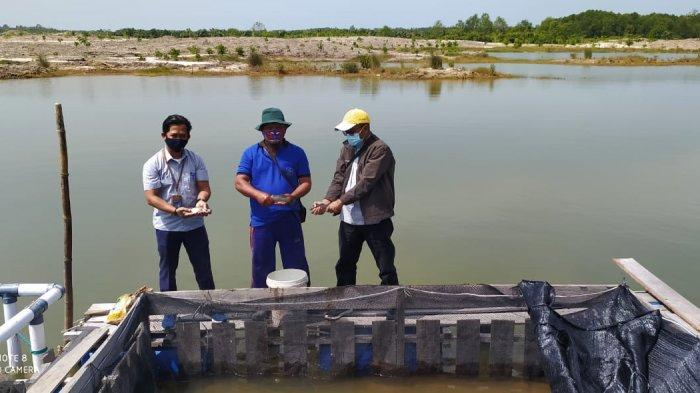 Dibina PT Timah, Kelompok Lingkungan Bangka Hijau Panen Kakap Putih 300 Kg - dibina-pt-timah-2.jpg
