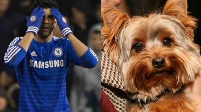 Diego Costa Depresi Berat Usai Membunuh Anjing Kesayangannya