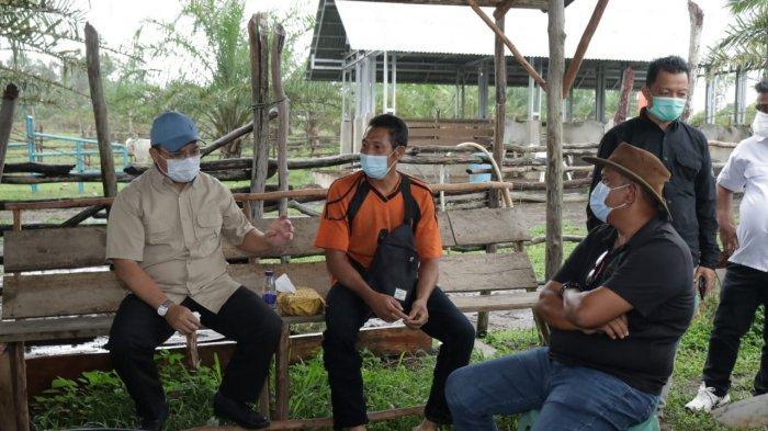 Gubernur Bangka Belitung Tantang Peternak di Desa Buding Jadi Kampung Ternak Sapi