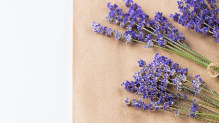 Mudah Ditemukan, Ini 6 Tanaman Bunga yang Dapat Usir Nyamuk di Rumah