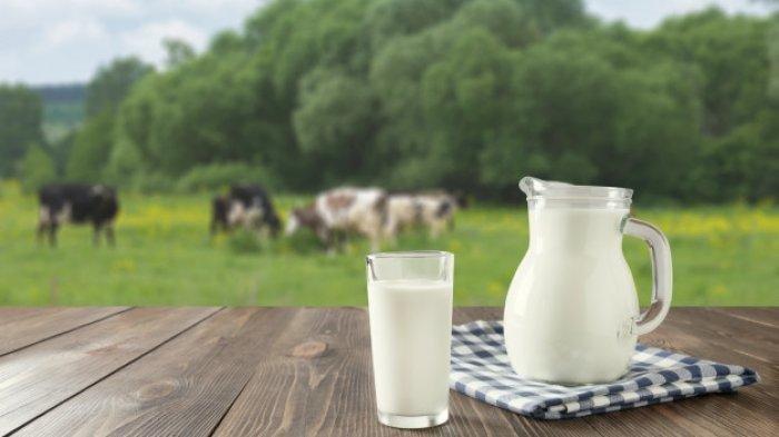 Jangan Konsumsi Susu Sapi Berlebihan, Ini Bahayanya