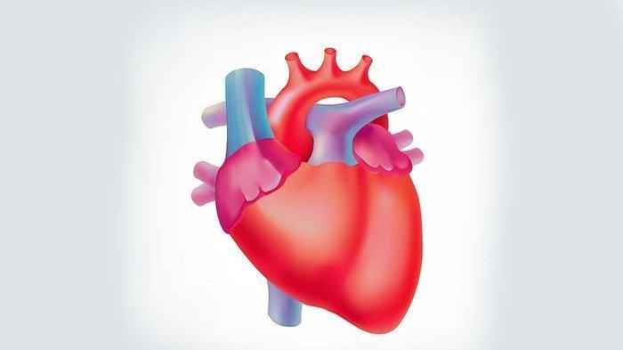 Mau Menyehatkan Jantung? Ikuti 6 Anjuran Memilih Makanan Berkolesterol Rendah Ini