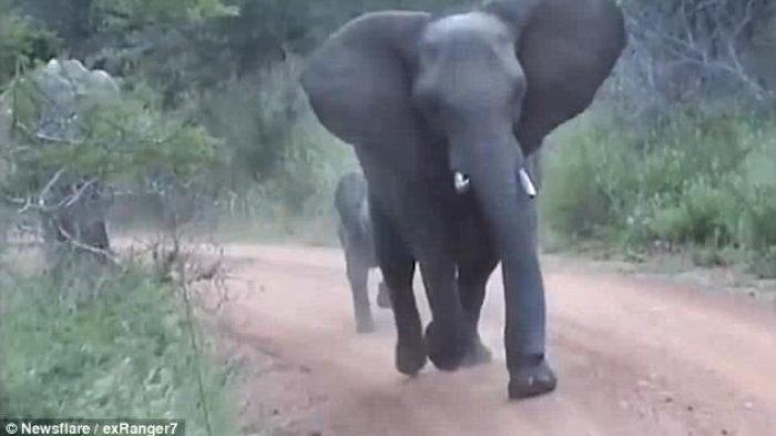 Gajah Jadi Hewan Nasional dan Simbol Negara Thailand, Ini Penyebabnya
