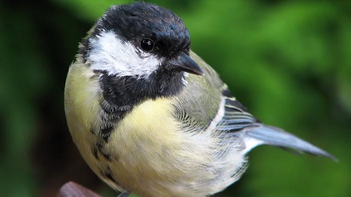 Siapa Sangka Burung Cantik Ini Ternyata Pembunuh Yang Sangat Kejam Bangka Pos
