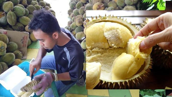 Ini Rahasia Durian Ucok Durian Tersedia Setiap Hari Walaupun Tidak Musim Halaman 3 Bangka Pos