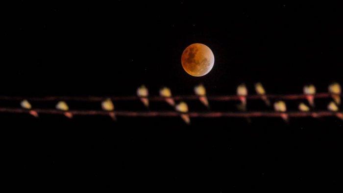 Kapan Waktu Gerhana Bulan Blood Moon 28 Juli yang Disebut Terlama Abad ini, Berikut Jadwalnya