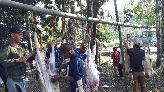 Tiga Perusahaan Sumbang Hewan Kurban, Tahun Ini Kurban di Kampung Dul Lebih Banyak