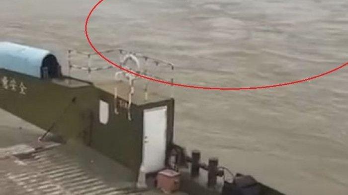 DISEBUT Monster Air Sepanjang 20 Meter Rekaman Videonya Viral hingga Pekerja Dermaga Ungkap Faktanya