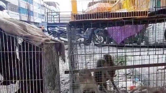 Gara-gara Otak Babi hingga Kelelawar Dijual di Pasar Liar, Indonesia dan Sejumlah Negara Disorot