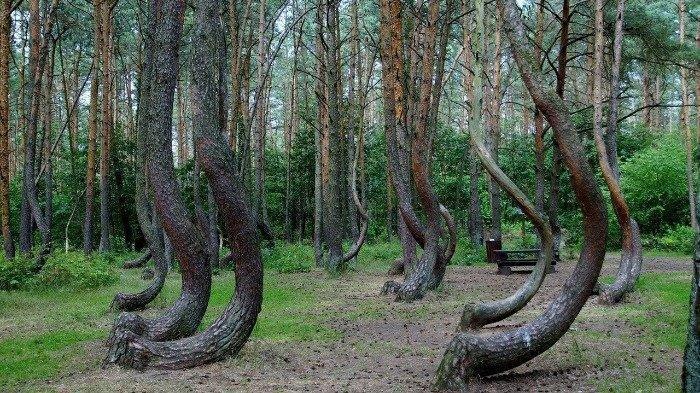 Hutan Bengkok hingga Suara Melengking, Ini 5 Misteri Paling Membingungkan di Dunia