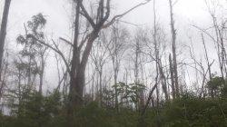 Dampak Kebakaran Maras 2015, Produksi Madu Asli Hutan Menurun Drastis